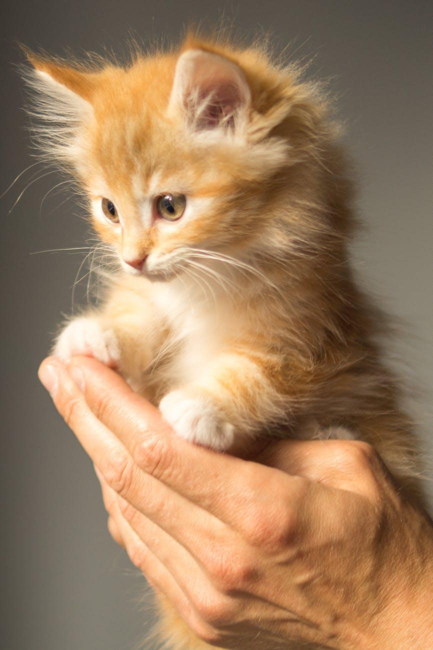 animal-cute-kitten-cat.jpg